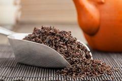 Black tea crop Royalty Free Stock Photo