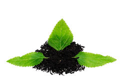 Black tea with leaf Royalty Free Stock Images