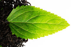 Black tea with leaf Royalty Free Stock Photo