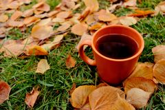 Black tea in orange cup on green grass and yellow fallen leaves. Rustic outdoor breakfast. Autumn background Stock Photography