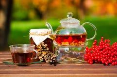 Black tea with viburnum, fruit, garden Stock Photography