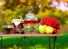 Black tea with viburnum, fruit, garden Stock Photos