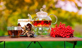 Black tea with viburnum, fruit, garden Royalty Free Stock Photos