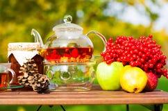 Black tea with viburnum, fruit, garden Royalty Free Stock Photo