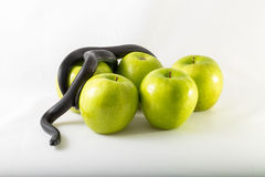 Black temptation snake and apples Stock Photo