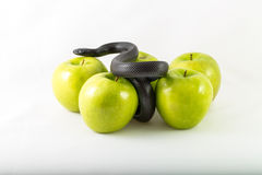 Black temptation snake and apples Stock Image