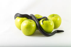 Black temptation snake and apples Stock Photos