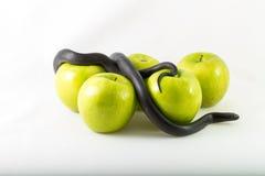 Temptation concept. Black nigrita snake on green smith apples isolated; on white background, temptation concept, poison apples concept, original sin Stock Photos