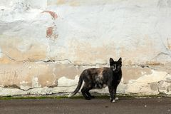 A black thin cat. With spots stands on the background of an old shabby wall on the street and looks into the camera. The concept of a stray animal cat stock photo