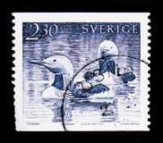 MOSCOW, RUSSIA - OCTOBER 3, 2017: A stamp printed in Sweden shows Black-throated Loon (Gavia arctica), Water Birds serie, circa 1. MOSCOW, RUSSIA - OCTOBER 3 stock photography