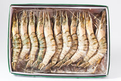 Black Tiger Prawns. As closeup on a paper box Royalty Free Stock Photos