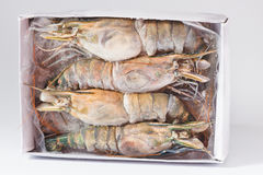 Black Tiger Prawns. As closeup on a paper box closeup Royalty Free Stock Photos