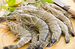 Black Tiger Prawns Royalty Free Stock Image