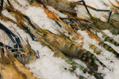 Black tiger prawns on a farm stand Stock Photo