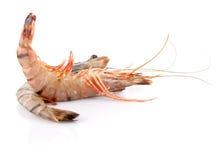 Black Tiger Shrimp stock image