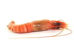 Black Tiger Shrimp Royalty Free Stock Photography