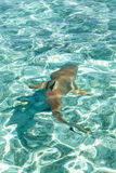 Black tipped reef shark Royalty Free Stock Photos