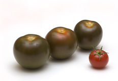 Black tomatoes on white Royalty Free Stock Photo