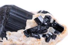 Black Tourmaline Point & Babies Nestled in Feldspar From Brazil,. Isolated on white background royalty free stock images