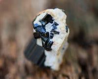 Black Tourmaline Point & Babies Nestled in Feldspar From Brazil on a tree bark in forest. Preserve stock photo
