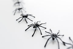 Black toy spiders chain over white background Stock Photos