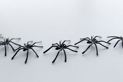 Black toy spiders chain on white background Royalty Free Stock Photography
