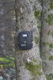 Black Trail Cam on Pine Tree for Deer Hunting Royalty Free Stock Photography