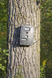 Black Trail Cam on Poplar Tree for Deer Hunting Stock Image