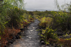 Black trail. Through volcanic Isla Isabela Galapagos Stock Photo