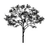 Black tree. In the white background Stock Photo