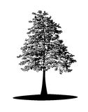 Black tree Royalty Free Stock Photography