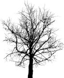 Black tree. A black, barren tree isolated on white background Stock Photo