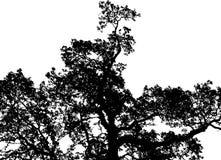 Black tree Royalty Free Stock Photo