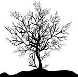 Black tree. Black silhouette of a tree without foliage on a white background Stock Photo