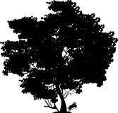 Black tree. Black silhouette of the big tree with foliage on a white background Stock Images