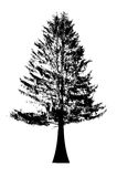 Black tree Royalty Free Stock Photo