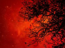 Black tree against orange galaxy. Tree, black branches, orange galaxy, background nice wallpaper, tree without leaves, abstract night royalty free stock photography