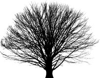 Black tree background Royalty Free Stock Image