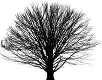 Black tree background