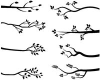 Black tree branch silhouettes Royalty Free Stock Image
