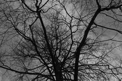 Black tree branches under the grey cloudy sky. Silhouettes of the winter trees on cemetery Stock Photography