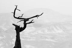 Black tree. Black dry tree on desert background Stock Photo