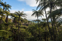 Black tree ferns forest Royalty Free Stock Images