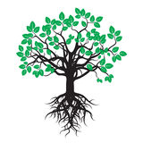 Black Tree with Green Leafs and Roots. Royalty Free Stock Photos