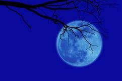 Black tree moon Stock Images
