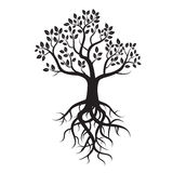 Black  tree and roots Stock Photos
