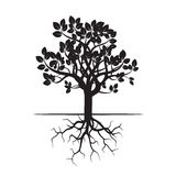 Black Tree and Roots. Royalty Free Stock Photos