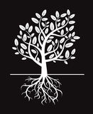 Black  tree and roots Stock Photography