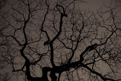 Black tree Stock Photography