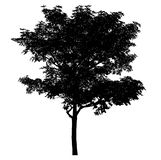 Black tree silhouette set of Thailand no.13 isolated on white background stock photography